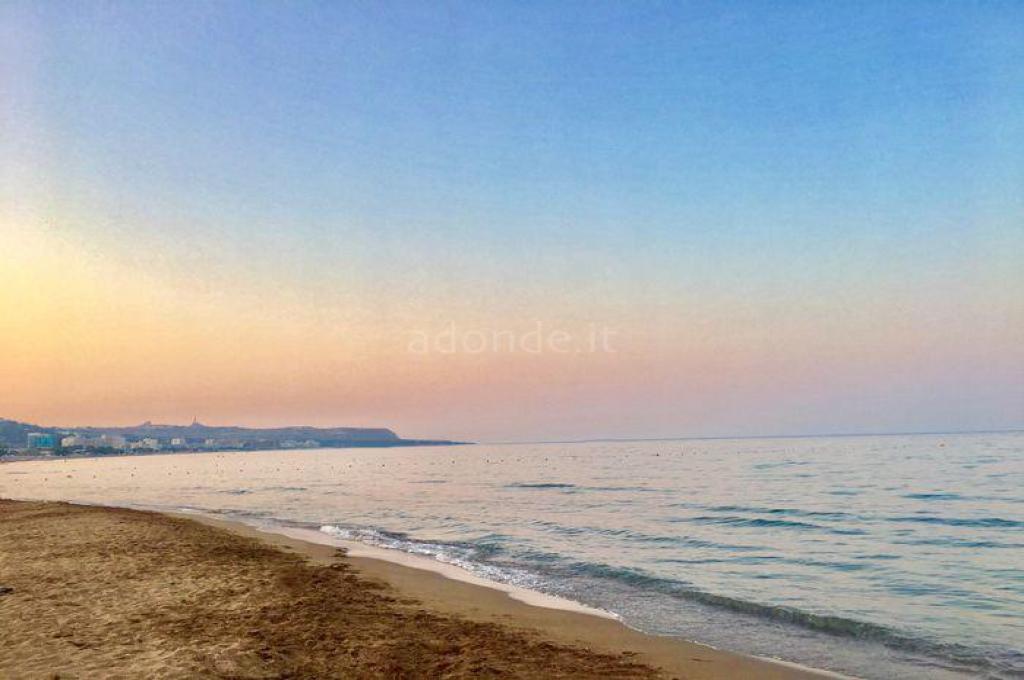 Bivalvia Beach Plus 1