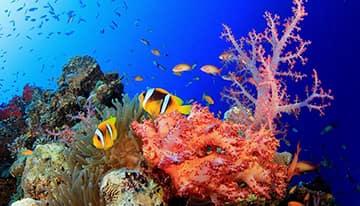 Offerte Vacanze Egitto Mar Rosso
